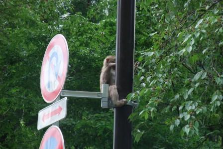 20140614②奥多摩の猿