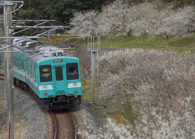 140215-JRW-105ーshinjo-ume