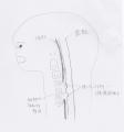 脊髄の絵3