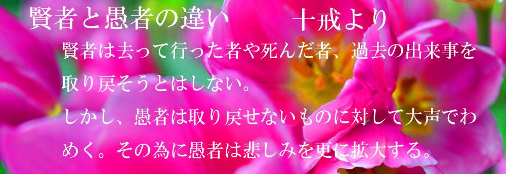 _DSC2591-1000_201407020621181ec.jpg
