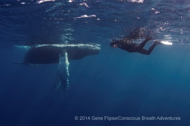 ザトウクジラと私