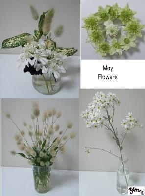 May Flowersサイン