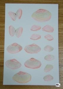 桜貝 サイン