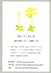 iichi DM2014
