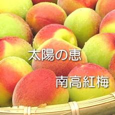 pctr_beniume_no1.jpg