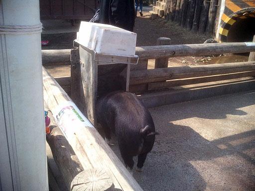 サイボク豚