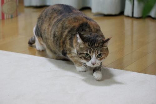 かみなり 10