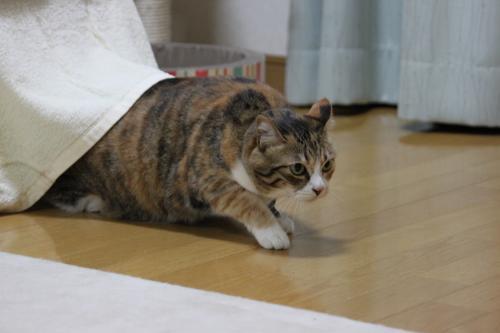 かみなり 5