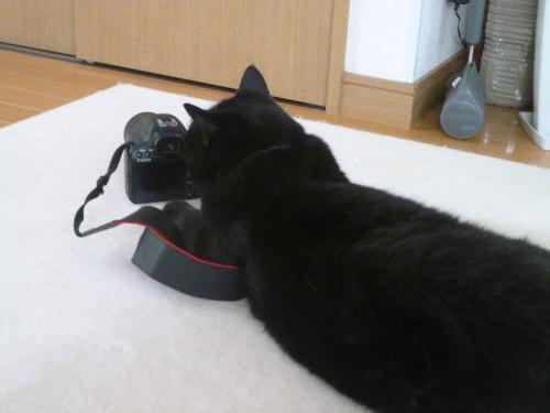 カメラ 11