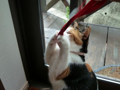 看板猫 5
