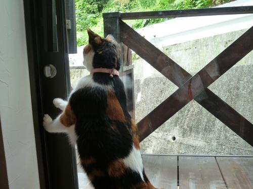 看板猫 4