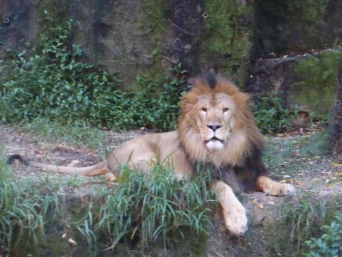 動物園 13