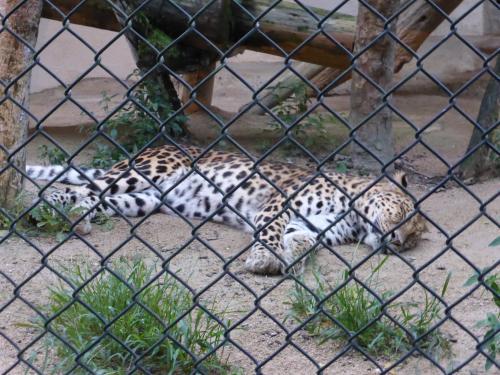 動物園 12