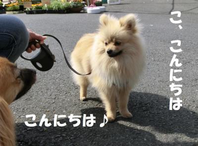 013繝シ繧ウ繝斐・繧ウ繝。繝ウ繝・convert_20140403210501