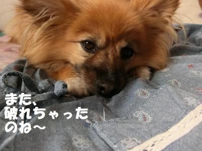 003繝シ繧ウ繝。繝ウ繝・convert_20140626213153