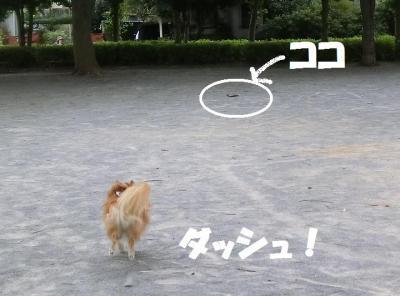 033繝シ繧ウ繝斐・1_convert_20140813224500