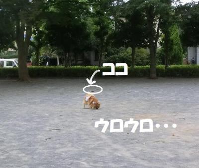 034繝シ繧ウ繝斐・1_convert_20140813224520