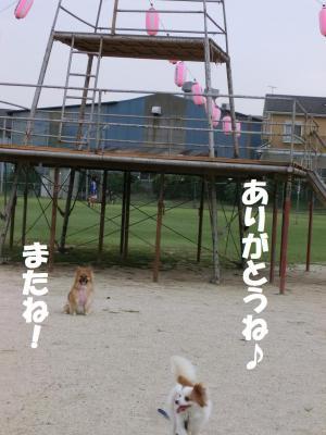 014繝シ繧ウ繝。繝ウ繝・convert_20140818213104