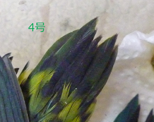 P1180205.jpg