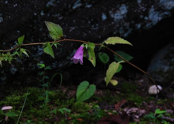 yamahotarubukuro08311.jpg
