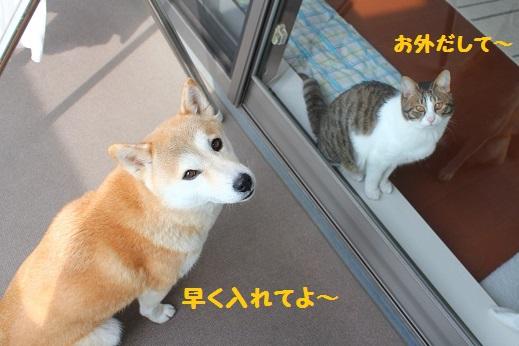 入れない~