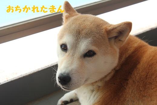 おちかれ0424