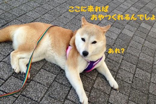 ちがうー!