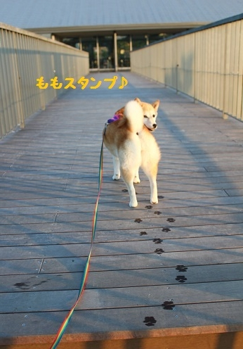 お散歩へ⑥