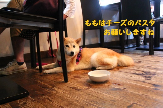 MATE CAFE④