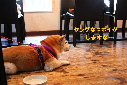 MATE CAFE⑤