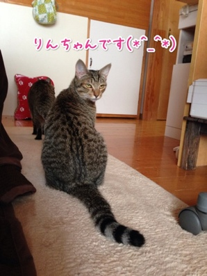 fc2blog_20140223172136465.jpg