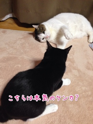 fc2blog_201403272155044a7.jpg