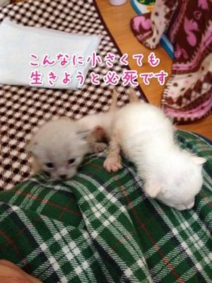 fc2blog_2014041809524661e.jpg