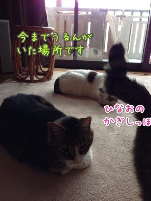 fc2blog_20140421100439bd1.jpg