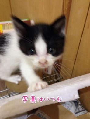 fc2blog_201404232116048fa.jpg