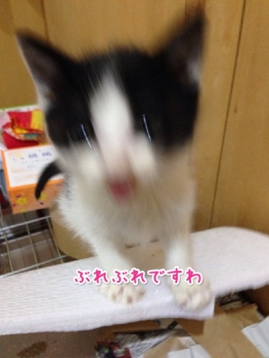 fc2blog_201404232116259fb.jpg
