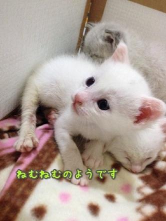 fc2blog_20140429215459ca8.jpg