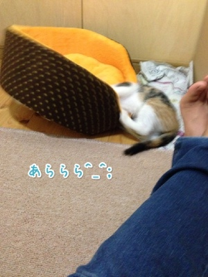 fc2blog_20140515202645ec8.jpg
