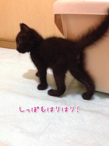 fc2blog_2014053023111987c.jpg