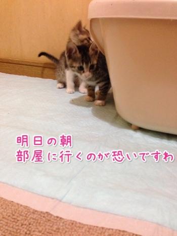 fc2blog_20140530231303495.jpg