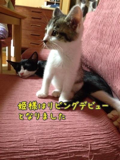 fc2blog_20140720215315bf7.jpg