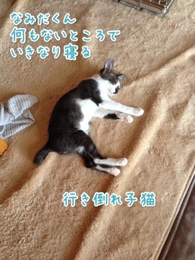 fc2blog_201407211421375f2.jpg
