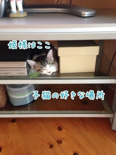 fc2blog_201407211425371f9.jpg