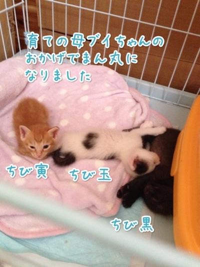 fc2blog_2014072114271782d.jpg