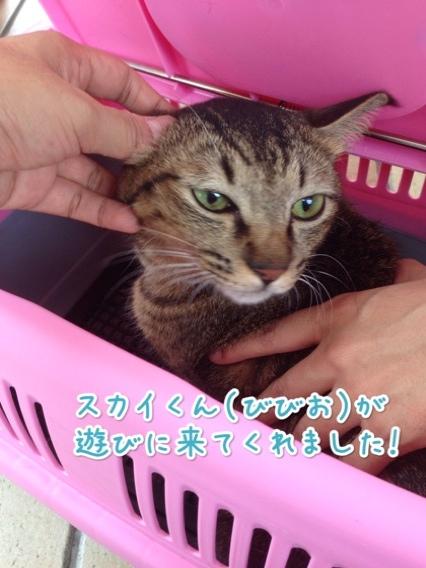 fc2blog_201408242207246af.jpg