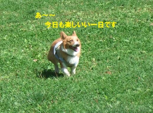 16140915DSCF0002.jpg