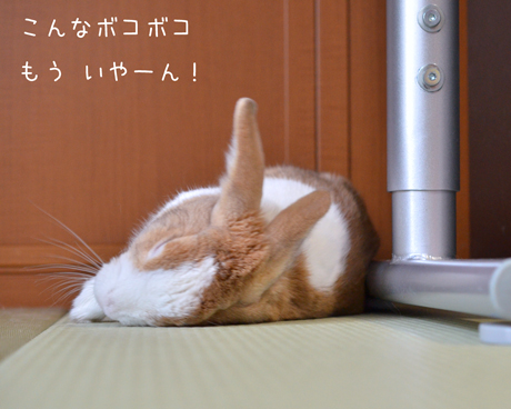 aDSC_7451.jpg