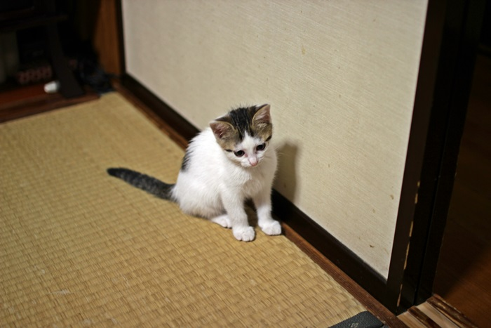 nobunobu1200076.jpg