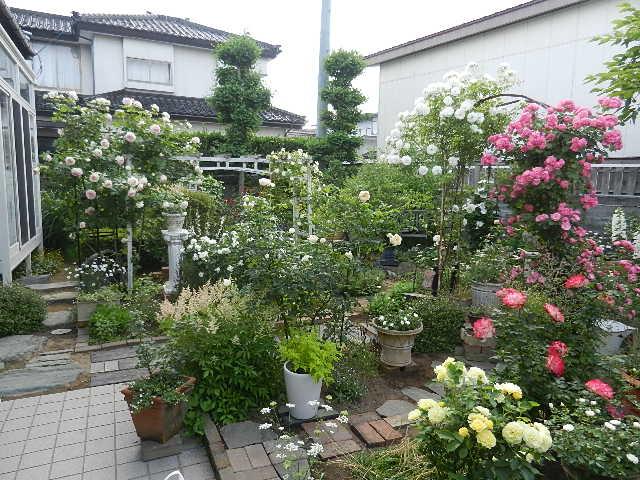 園バラ 001