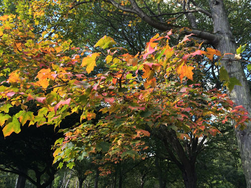 National Botanical Gardens in autumn1